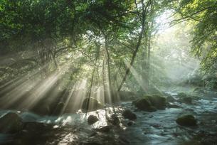 原生林と湧水と光芒の写真素材 [FYI02678629]