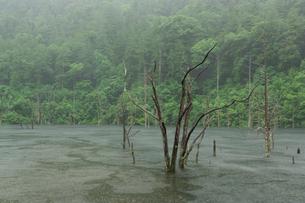 雨の自然湖の写真素材 [FYI02678663]