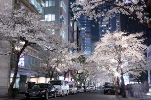 桜咲く日本橋さくら通りのライトアップの写真素材 [FYI02678718]
