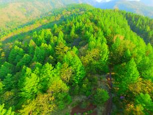上空から見た唐松林の写真素材 [FYI02678724]