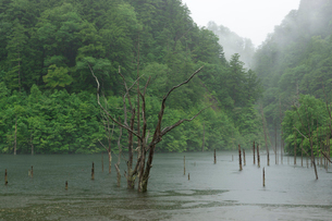 雨の自然湖の写真素材 [FYI02678799]