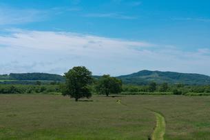 牧草地のハルニレの大木の写真素材 [FYI02678840]