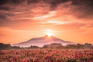 ポピーと筑波山の写真素材 [FYI02678877]