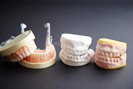 歯の模型の写真素材 [FYI02678938]