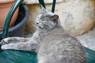 まどろむネコの写真素材 [FYI02678994]