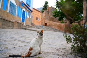 モロッコ シャウエンの猫の写真素材 [FYI02678998]