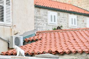 屋根の上のネコの写真素材 [FYI02679010]