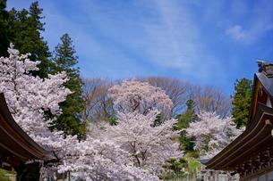 福島 法蔵寺の写真素材 [FYI02679022]