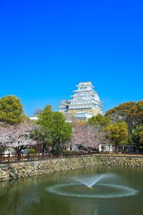 姫路城 城見橋より天守閣と桜に噴水の写真素材 [FYI02679038]