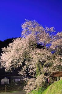 岩井畝の大桜 ライトアップ夜景の写真素材 [FYI02679039]