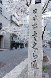 春の日本橋さくら通りの写真素材 [FYI02679103]