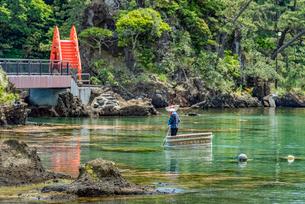 新潟県 佐渡島 小木のたらい舟の写真素材 [FYI02679122]
