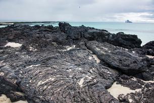 ガラパゴス諸島の溶岩の海岸の写真素材 [FYI02679127]
