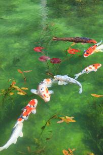 モネが描いた絵のような池の写真素材 [FYI02679134]