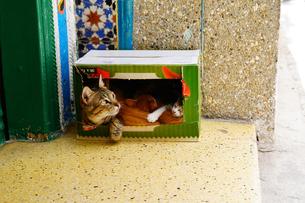 モロッコ ティトゥアンの猫の写真素材 [FYI02679157]