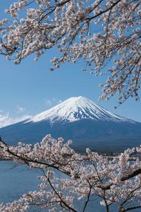 満開の河口湖の桜と冠雪の富士山の写真素材 [FYI02679173]