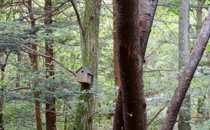 緑豊かな軽井沢の森にある小鳥のおうちの写真素材 [FYI02679174]