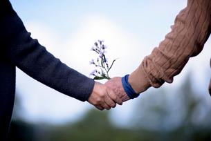 手をつなぐシニア夫婦と野花の写真素材 [FYI02679179]