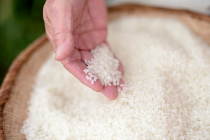 精米した米を確認するシニア女性の手の写真素材 [FYI02679212]