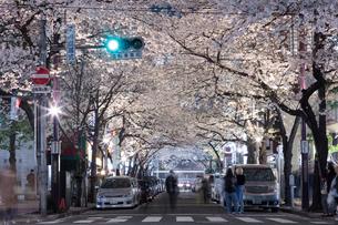 桜咲く日本橋さくら通りのライトアップの写真素材 [FYI02679237]