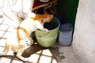 モロッコ ティトゥアンの猫の写真素材 [FYI02679299]