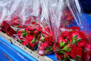 バンコクの屋台で売られるプアンマーライの材料となるバラの写真素材 [FYI02679356]