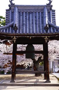 宝土寺の鐘と満開の桜の写真素材 [FYI02679363]