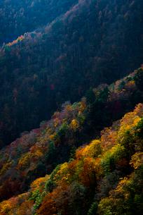 山の紅葉の写真素材 [FYI02679379]