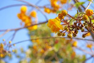 タイに咲く花の写真素材 [FYI02679412]