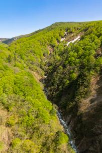 大橋から望む城ヶ倉渓谷の写真素材 [FYI02679583]