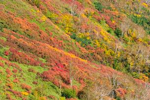 銀泉台第一花園付近の紅葉の写真素材 [FYI02679606]