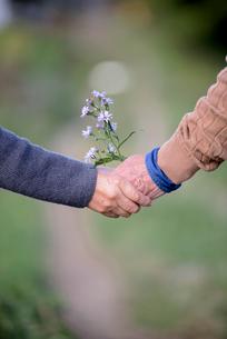 手をつなぐシニア夫婦と野花の写真素材 [FYI02679620]