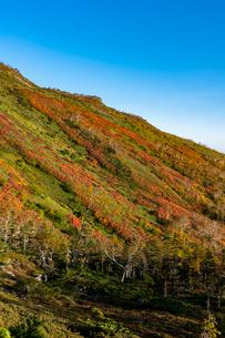 銀泉台第一花園付近の紅葉の写真素材 [FYI02679656]