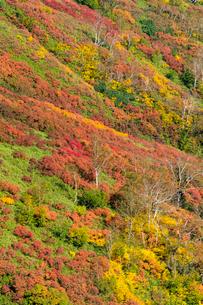 銀泉台第一花園付近の紅葉の写真素材 [FYI02679672]