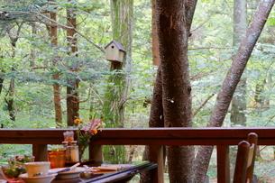 緑豊かな軽井沢の森にあるカフェと小鳥のおうちの写真素材 [FYI02679696]