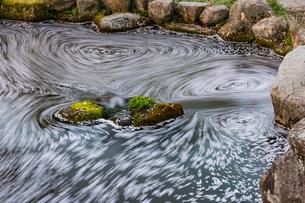 岐阜公園の日中友好庭園の花筏の写真素材 [FYI02679754]