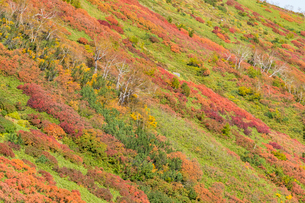 銀泉台第一花園付近の紅葉の写真素材 [FYI02679760]