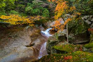 愛媛県 滑床渓谷の写真素材 [FYI02679774]