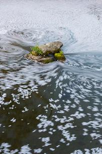 岐阜公園の日中友好庭園の花筏の写真素材 [FYI02679785]