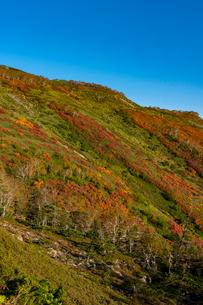 銀泉台第一花園付近の紅葉の写真素材 [FYI02679804]