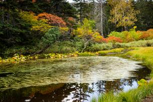 紅葉のバショウ沼の写真素材 [FYI02679874]