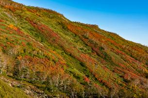 銀泉台第一花園付近の紅葉の写真素材 [FYI02679908]