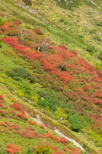 銀泉台第一花園付近の紅葉の写真素材 [FYI02679935]