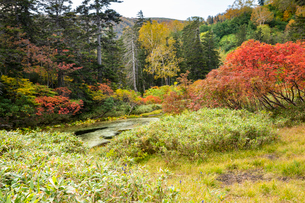 紅葉のバショウ沼の写真素材 [FYI02679937]