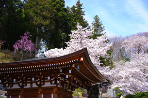 福島 法蔵寺の写真素材 [FYI02679957]
