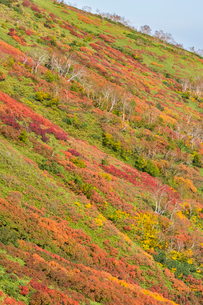 銀泉台第一花園付近の紅葉の写真素材 [FYI02680067]
