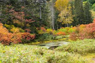 紅葉のバショウ沼の写真素材 [FYI02680084]