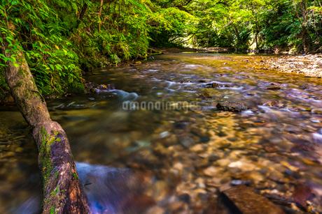 やんばるの川の写真素材 [FYI02680105]