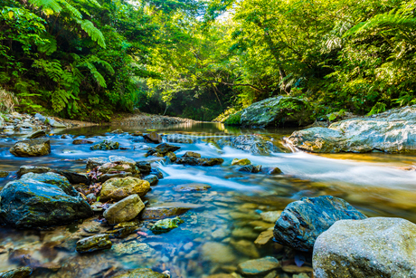 やんばるの川の写真素材 [FYI02680121]