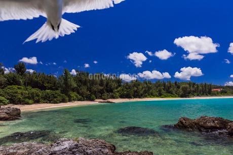 沖縄県 エリグロアジサシの写真素材 [FYI02680256]